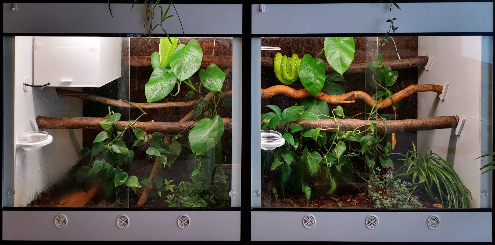 Terrarium Eclosure Morelia viridis