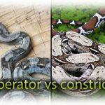 Artikelbild constrictor vs imperator